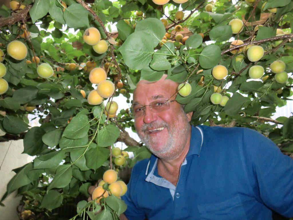 Orlandos Aprikosenbaum